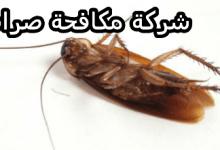 شركات مكافحة الصراصير بالجبيل