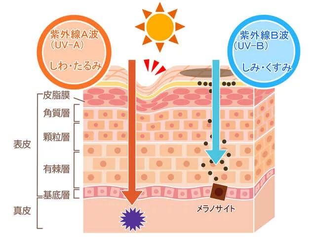 ultravioletray