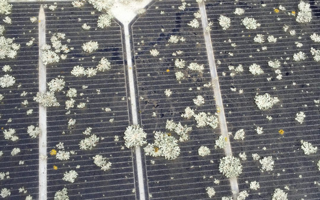 Removing The Solar Panel Cleaning Problem No One Is Lichen
