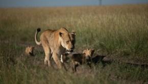 Earth Day 50 Born Wild habitat conservation
