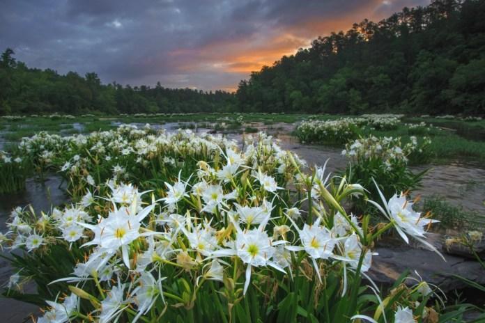 plants at risk of extinction