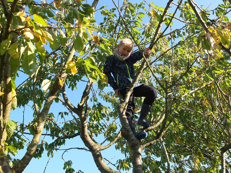 Child in Tree