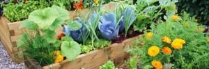 Garden_usable