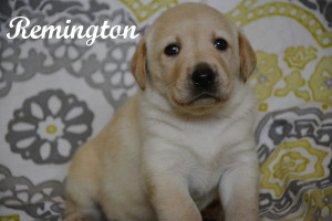 Remington 4 weeks.