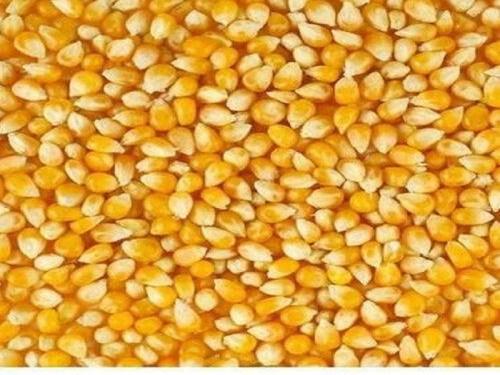 Maize importation into Nigeria
