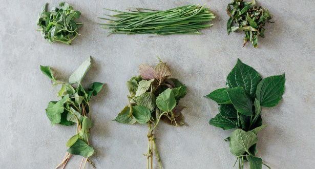 herbs for healing the flu