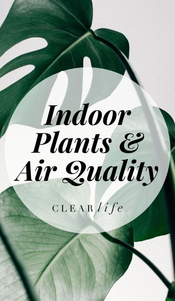 Adding the right plants to your household can aid on removing toxic gases from the air you breathe.