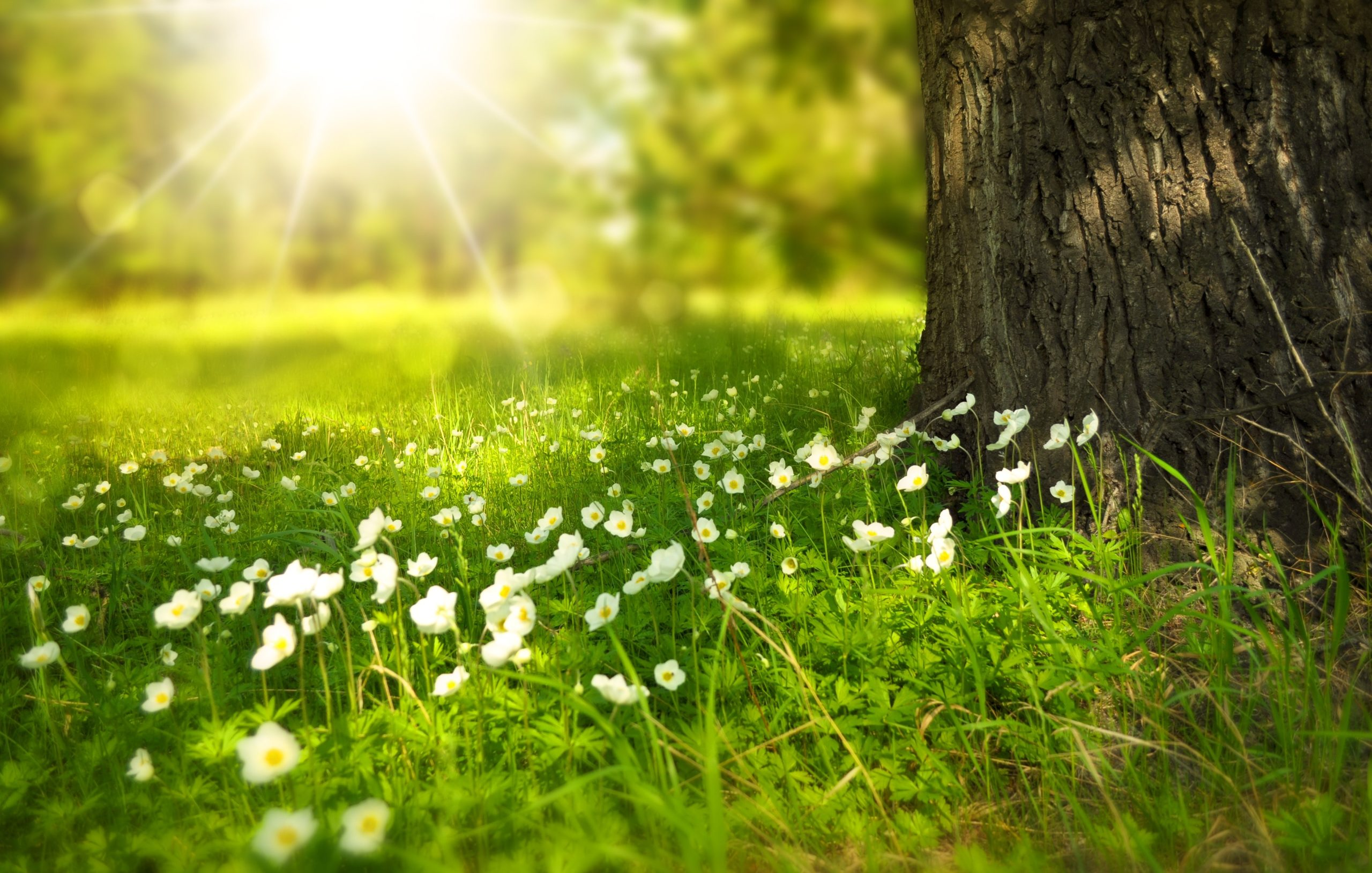 7 Reasons Spring Can Boost Your Mood AND Your Clutter Clearing Efforts