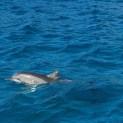 baia_dos_golfinho_golfinho