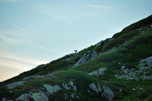 Alpes-2012 0681