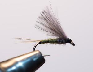 Olive (12)