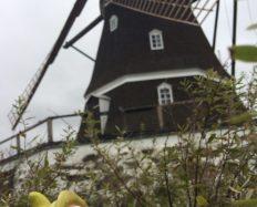 Aabenraa Danemarque voyage en van
