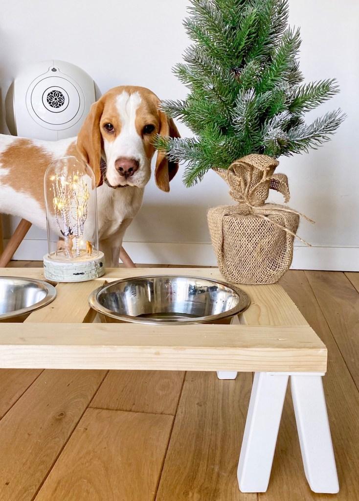 porte-gamelle pour chien diy chiot beagle lemon accessoire arrivé bien accueillir nouveau chien clematc