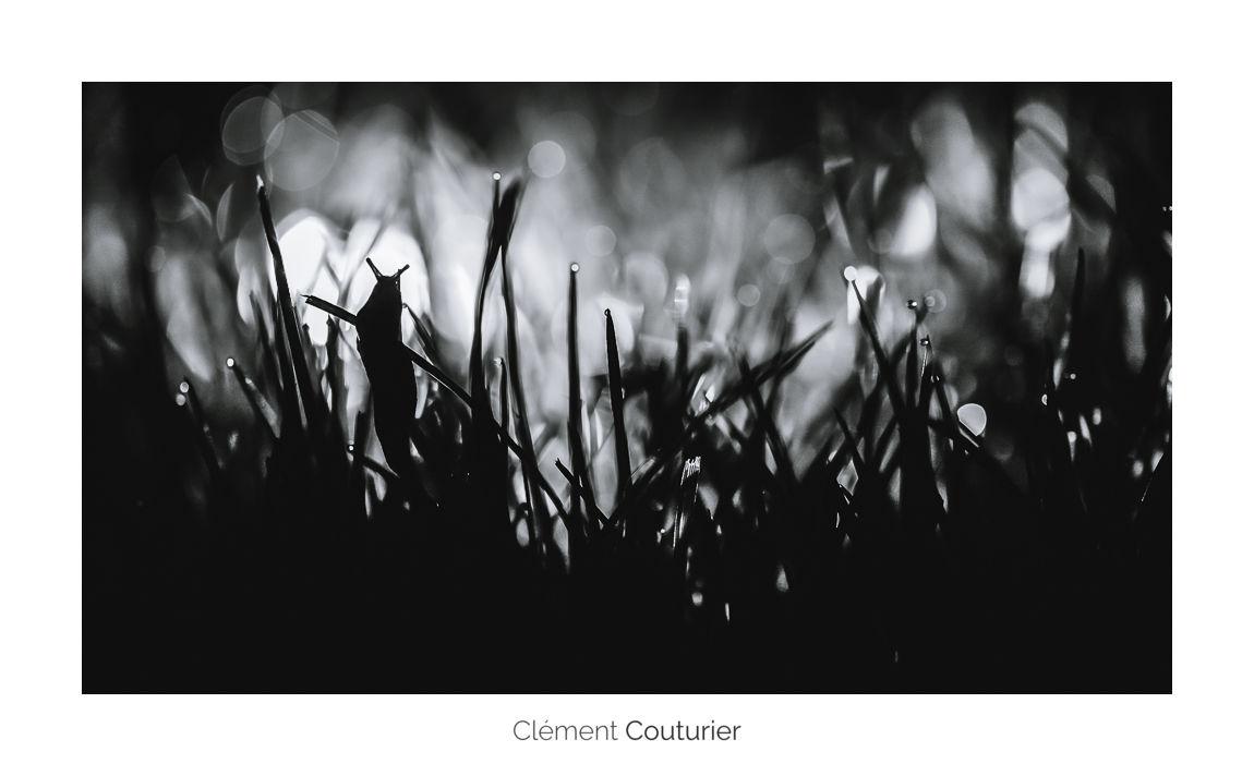 limace - Clément Couturier