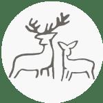 An en-deering favourite