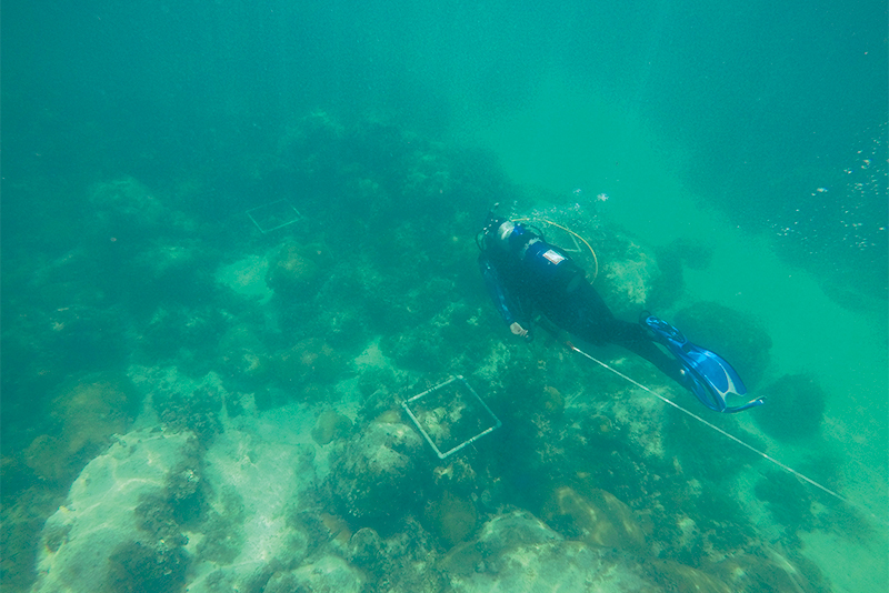 Clemson researcher inspecting a coral site