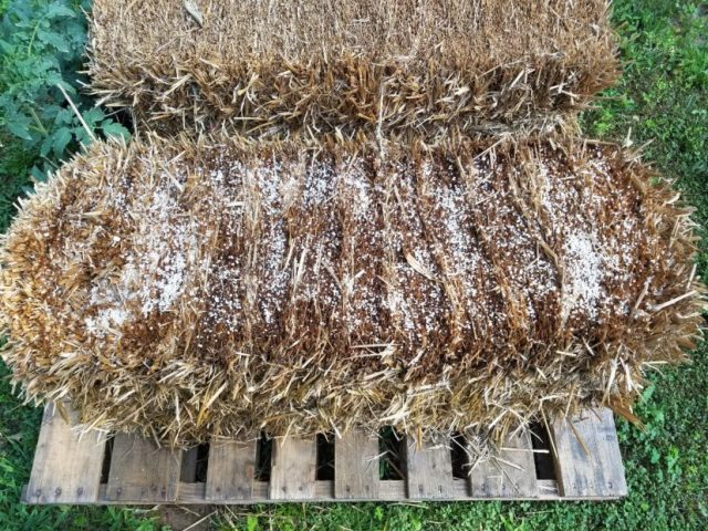 Sprinkle appropriate amounts of lime and fertilizer evenly over the bale. Water each application in thoroughly.