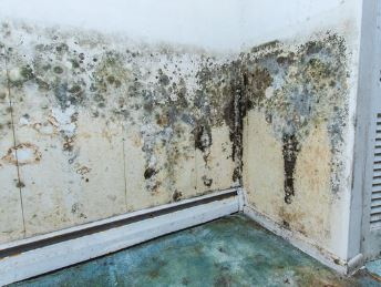 Mold In Hime