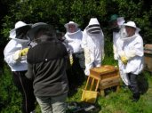 Teaching in the Apiary