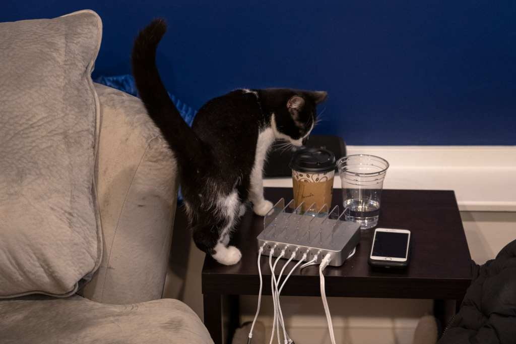 Curious cat at AffoGATO cat cafe