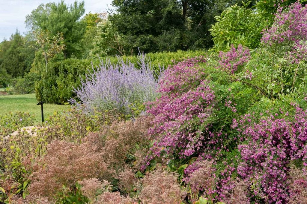 Blooms at Holden Arboretum