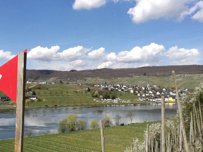 Blick aus den Weinbergen auf Piesport.