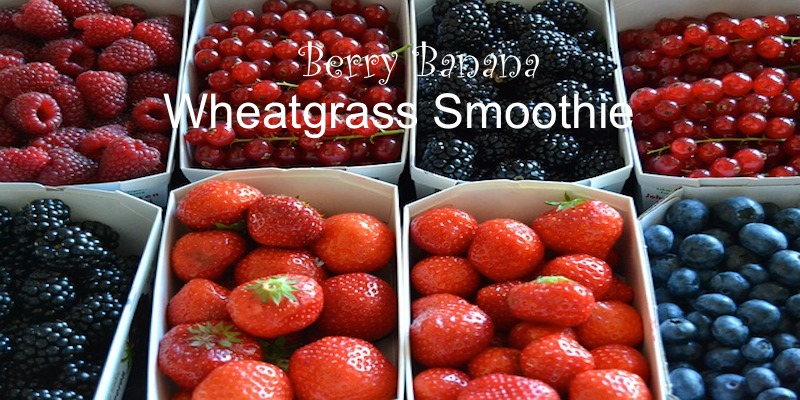 Berry Banana Wheatgrass Smoothie #green #organic #food #healthyliving