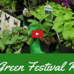 Chasing Sustainability at the 2017 Green Festival