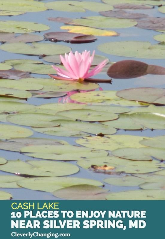 Nature Places to visit - Cash Lake