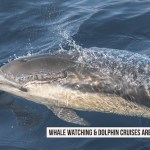 You Must to Go On A Whale Watching & Dolphin Cruise
