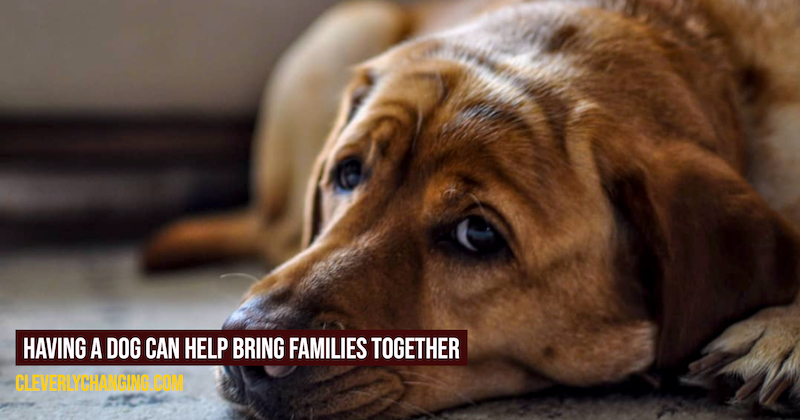 Having a Dog Can Help Bring Families Together