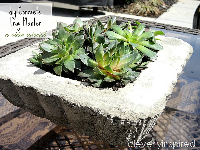 diy concrete planter @cleverlyinspired (5)