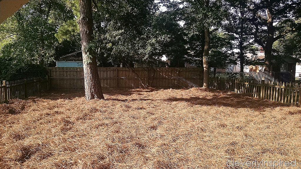 Idea for Grassless Yard (no maintenance Yard) - Cleverly ... on Grassless Garden Ideas  id=29723