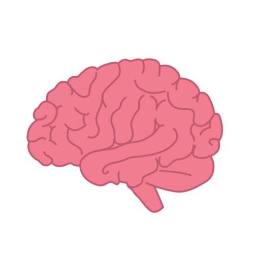 Mon cerveau : Kezako ?