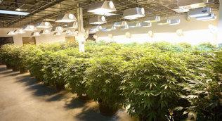 U.S. drug czar: Marijuana is drug most often linked to crime