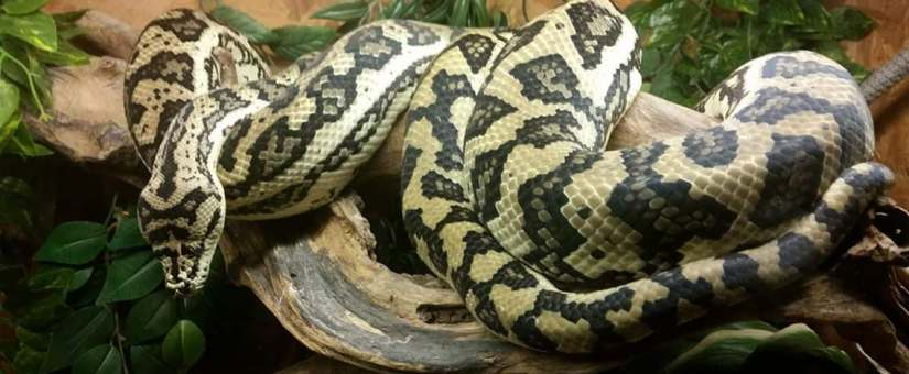 La photographie avec des reptiles ( avec pratique)