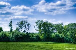 Les arbres-Clicandzoomphoto