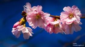 argenton-fleur-Clicandzoomphoto