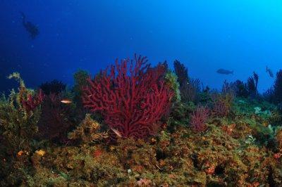 costiera di calafuria corallo rosso CliccaLivorno