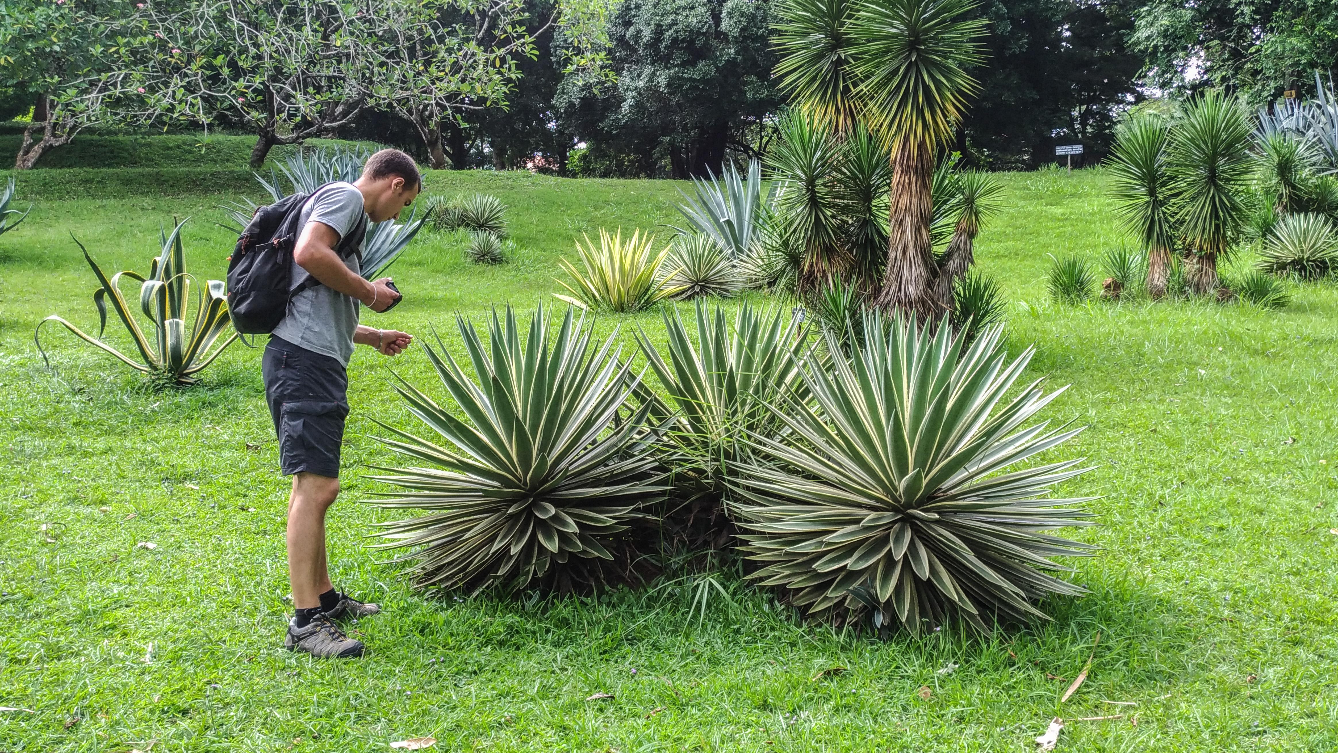 Peradeniya Gardens - Kandy (38)_edited