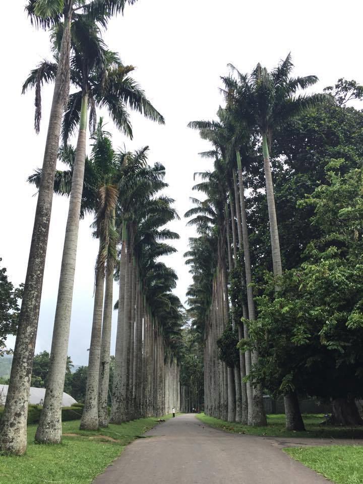 Peradeniya Gardens - Kandy (3)_edited