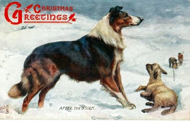 Christmas postcards with dogs - Collie