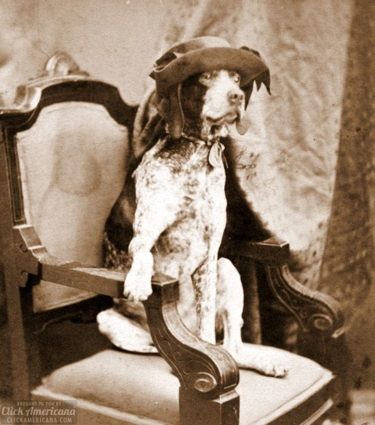 Silly dog on a chair - wearing a hat - vintage photo