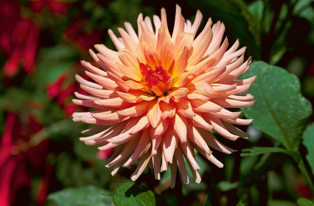 Top 50 flower names for girls