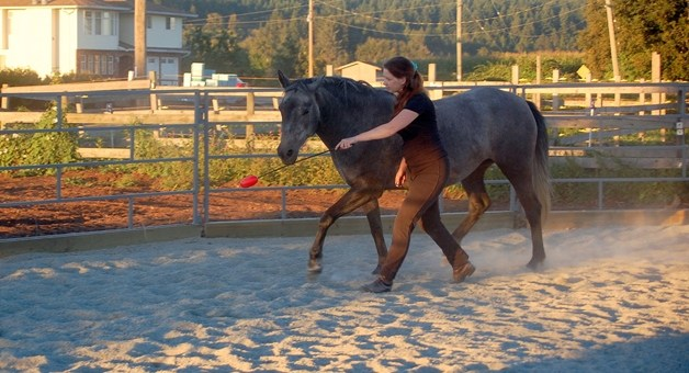 4 Benefits of Teaching Your Horse to Target