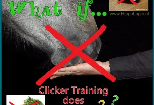 6 Reasons Why Clicker Training Doesn't Work (and What You Can Do About It)