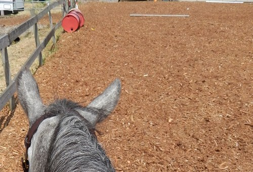 What if… your horse doesn't like arena work?