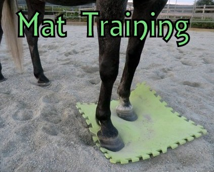 5 Benefits of Teaching Your Horse to Stand on a Mat