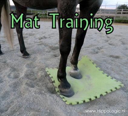 mat_training_hippologic2