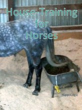 house training horses with clicker training